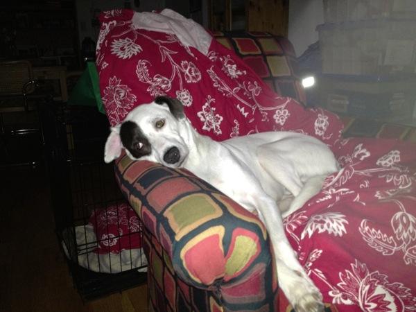 Lazy Millie